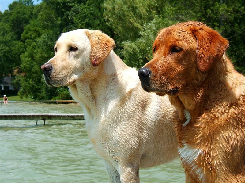 Gebelikte Evcil Hayvanlar