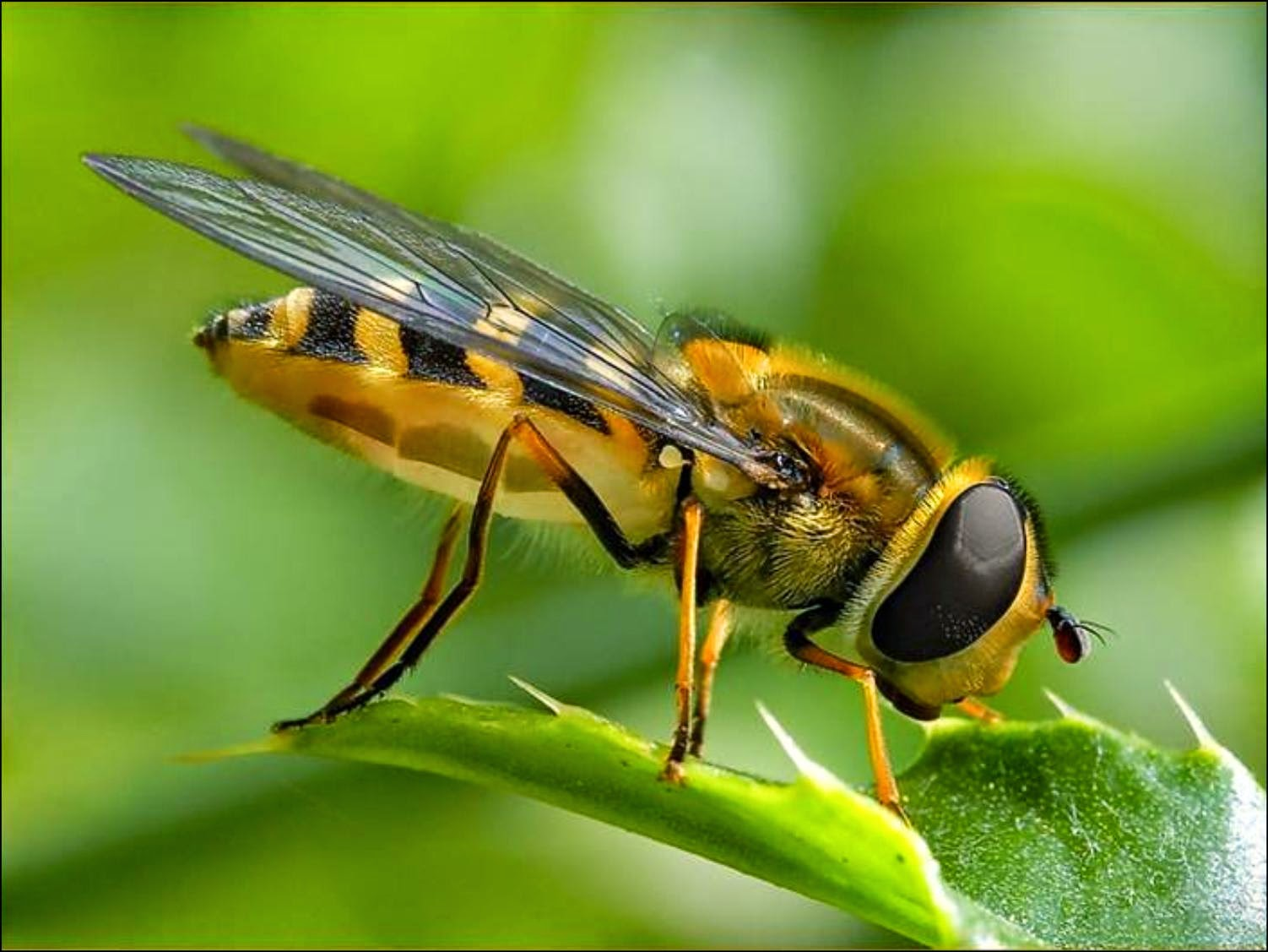 arı teknolojisi