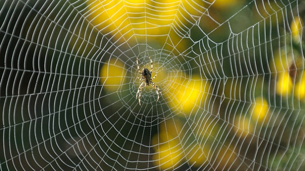 örümcek ipeği
